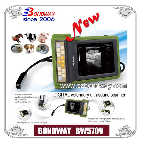 DIGITAL veterinary ultrasound scanner (BW570V)