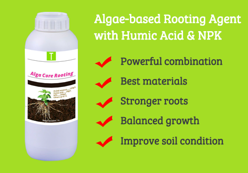 Alga Core Rooting