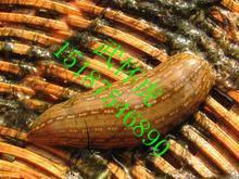 Wild leech dry goods
