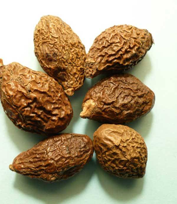 Dried Malva Nut From Viet Nam