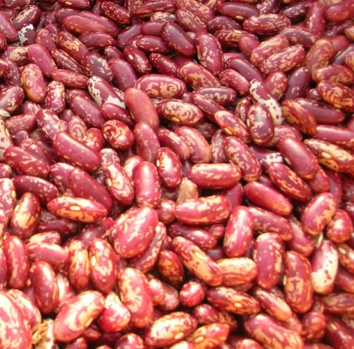 Red Kidney Beans ( Red Beans ) and Dark Red Kidney Beans for sale