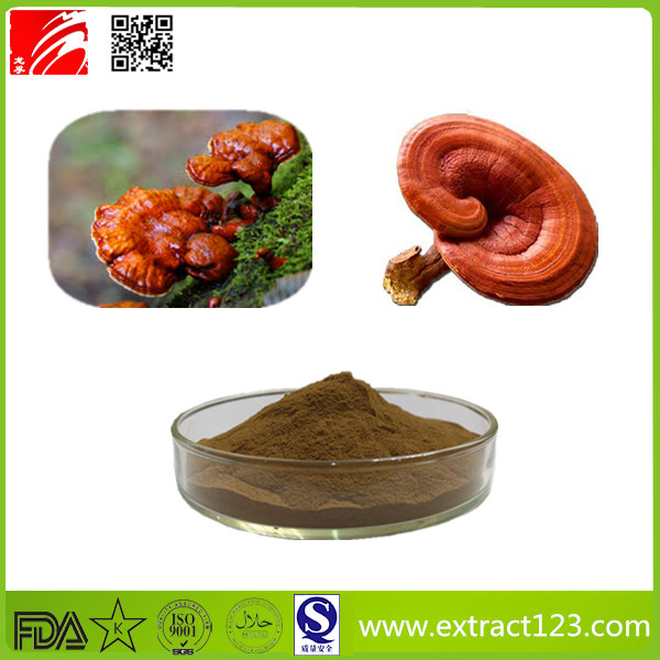 High Quality Ganoderma Lucidum Extract
