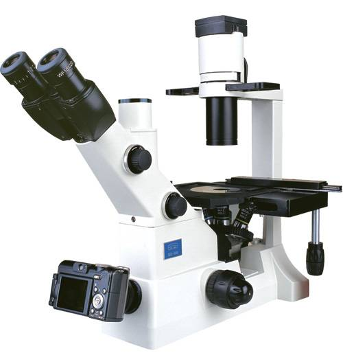 XD-202 Laboratory Biological Microscope