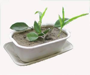 disposable paper flower pot