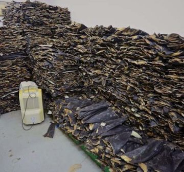 Dried Shark fins and tail