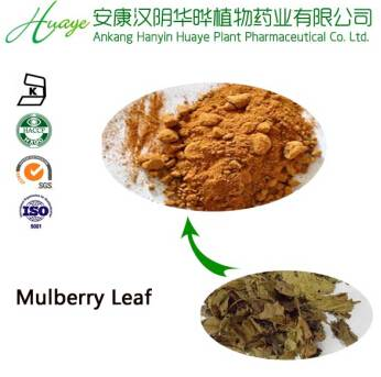 GMP manufacturer supply Mulberry leaf extract