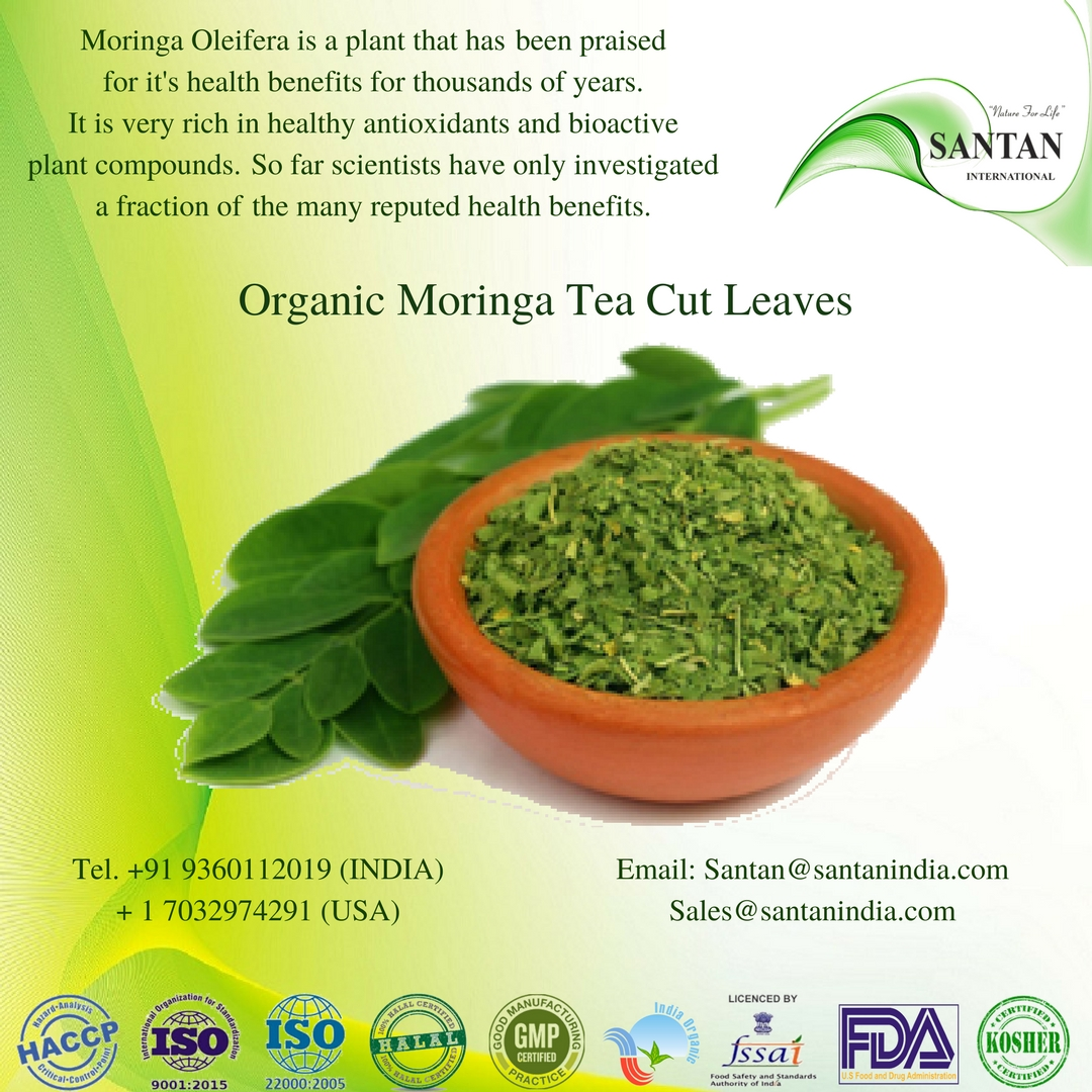Moringa Tea Cut Leaf ORGANIC