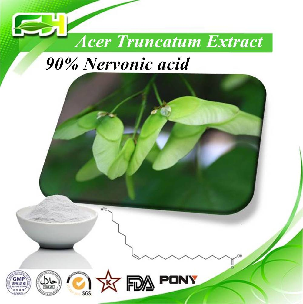 China Acer Truncatum Extract 90% Nervonic Acid