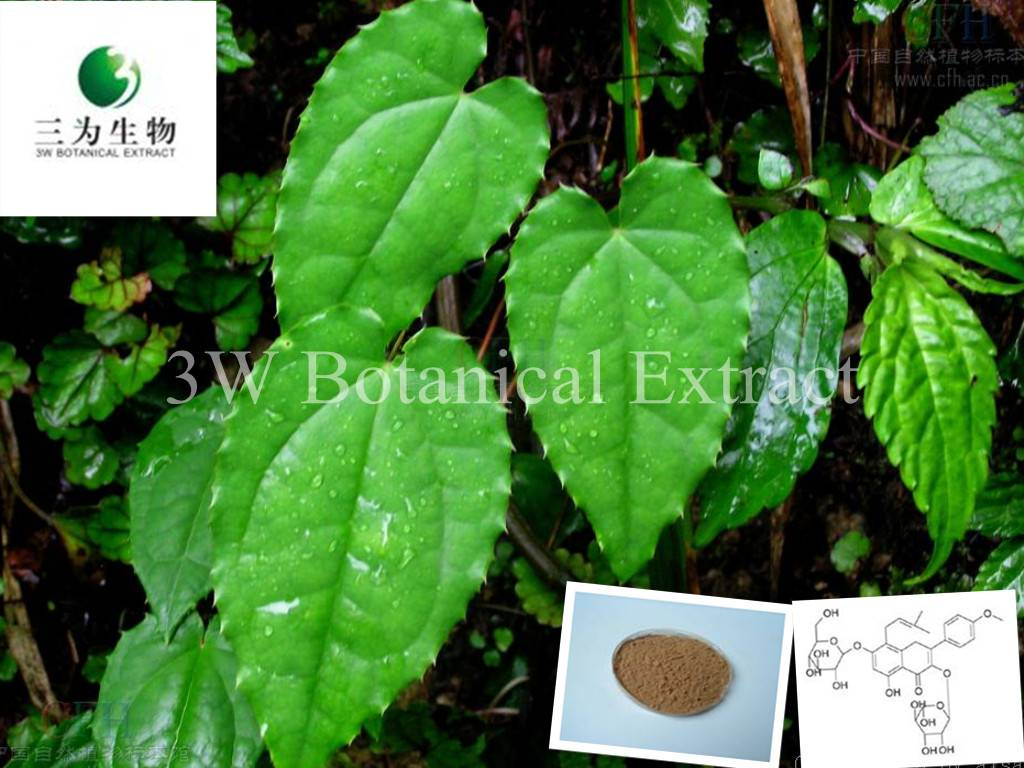 Epimedium Extract(sales05@3wbio.com)