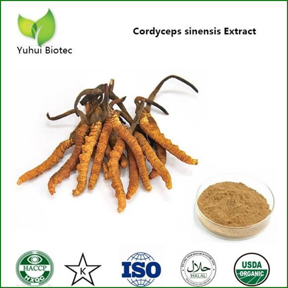 cordyceps extract,cordyceps sinensis extract,cordyceps extract powder