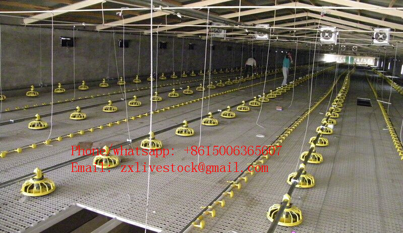 Automatic chicken pan feeding system