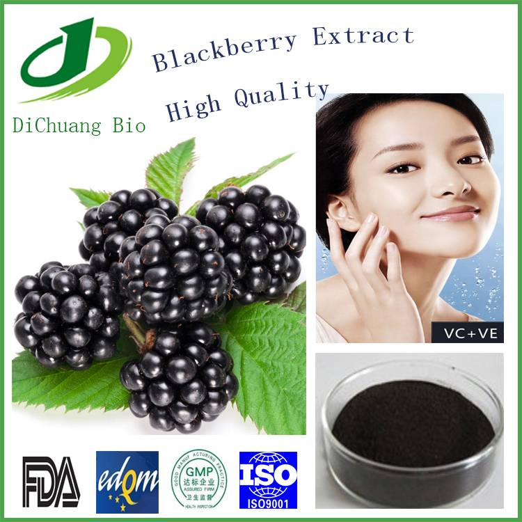 Blackberry Extract Procyanidine 100% natural