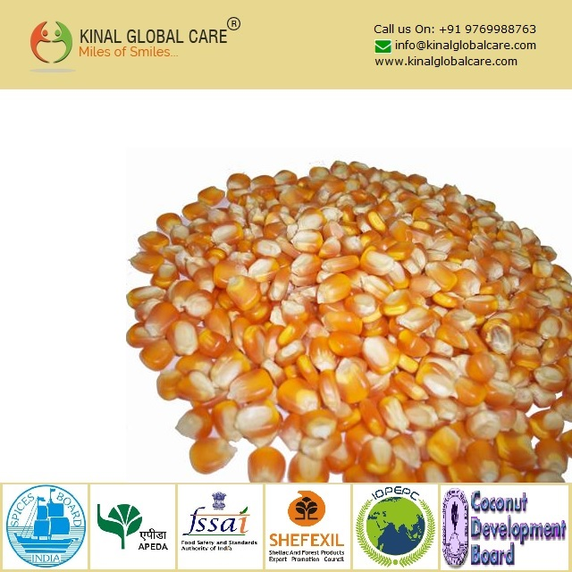 Best Quality Yellow Maize