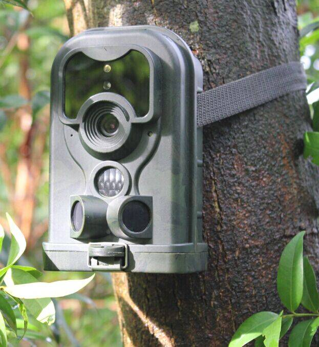 Motion activated scouting camera