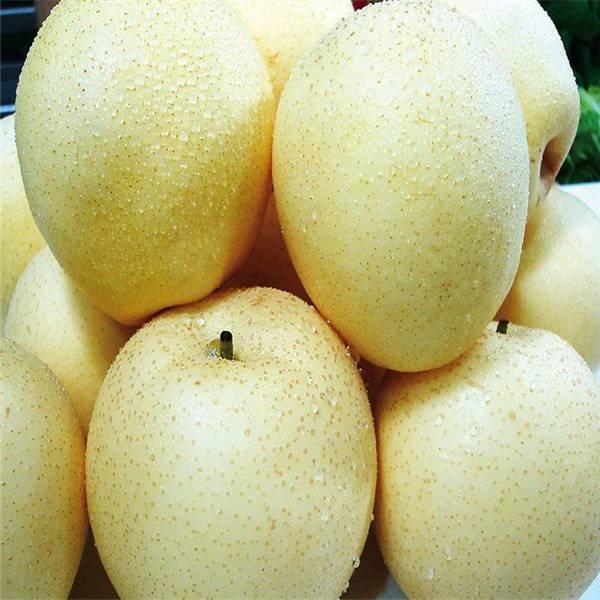 China Sweet Crisp Pears