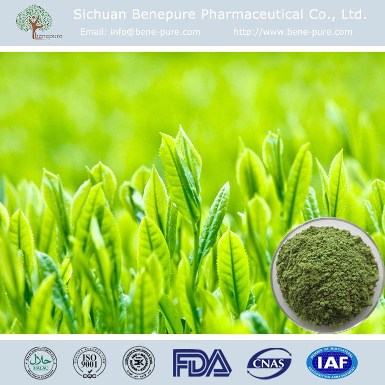 supply Natural GTP/Tea Polyphenols 50%~98% HPLC Green Tea Extract, BENEPURE