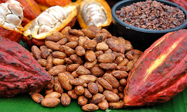 Grade AA Dried Fermented Cocoa Beans
