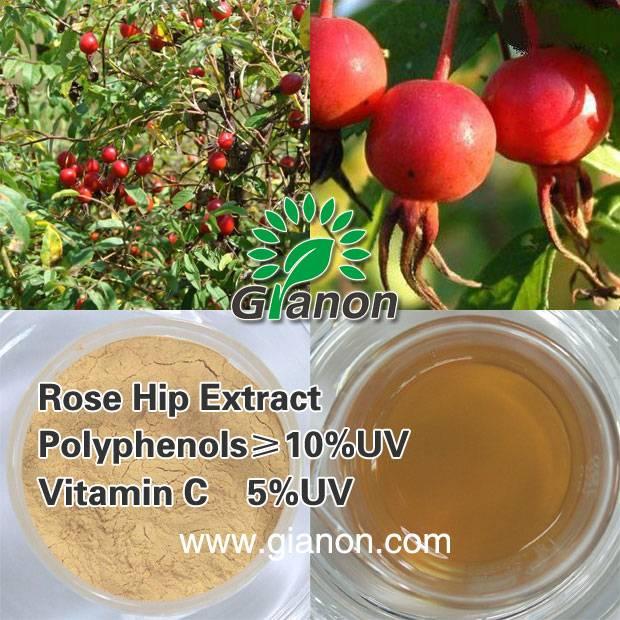 Rose hip Extract Natrual Vitamin C 3.5%