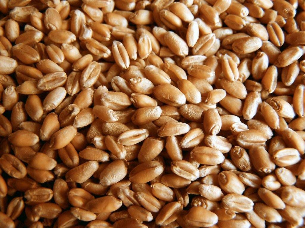 Wheat from Russia