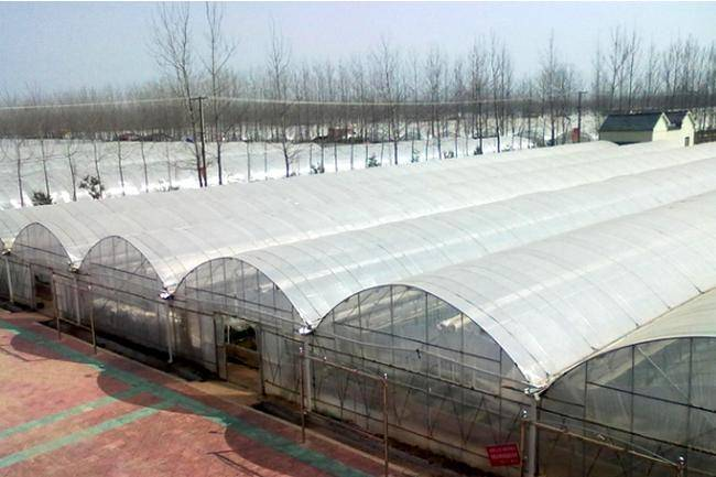 Large Plastic Film Multi Span Green House with Factory Price