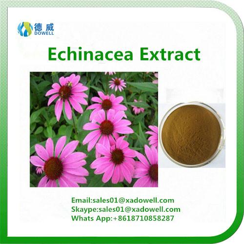 Botanic Extract Echinacea Extract CAS No: 6537-80-0