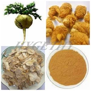 High Quality Maca Extract Powder