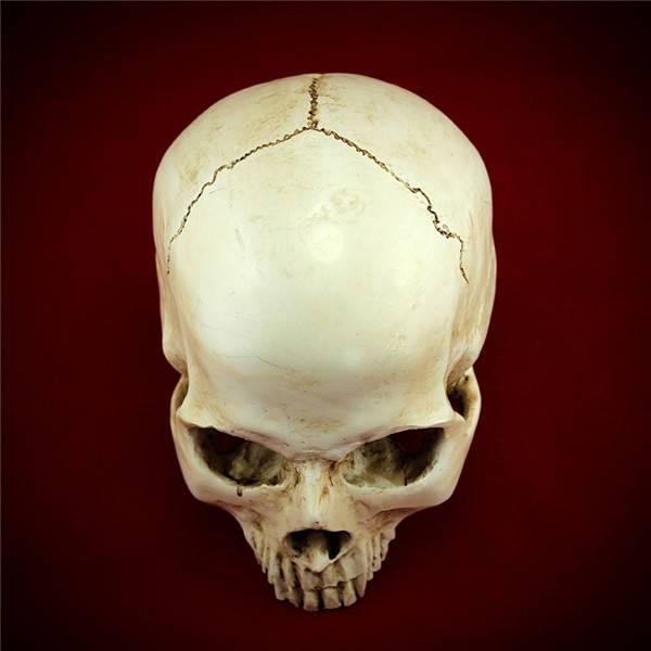 Human Proportion Halloween Props Sketch Model Skull Human Resin Head Skull