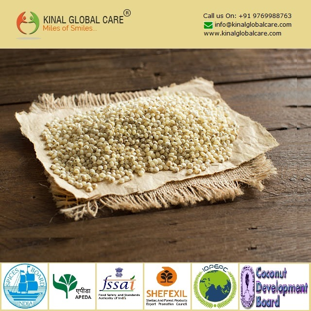 Best Selling Indian White Sorghum