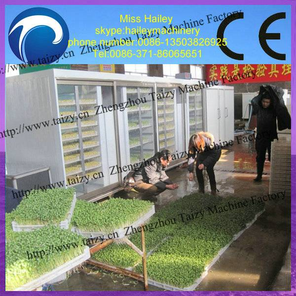 hot sale stainless steel automatic bean sprout growing machine