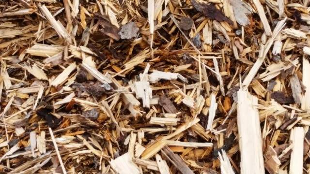 Fuel wood chips