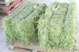 Alfalfa Hay bales Grade A lucerne Bales alfalfa