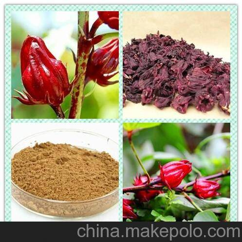 100% pure natural Ruselle P.E. extract/ Roselle calyx Extract Proanthocyanidins 5%-30%