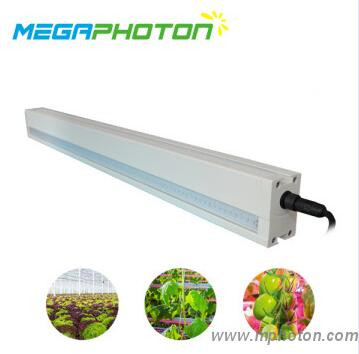 4ft 5ft 8ft 60-150w IP66 LED grow light Interlighting with Meanwell LED Driver for green house