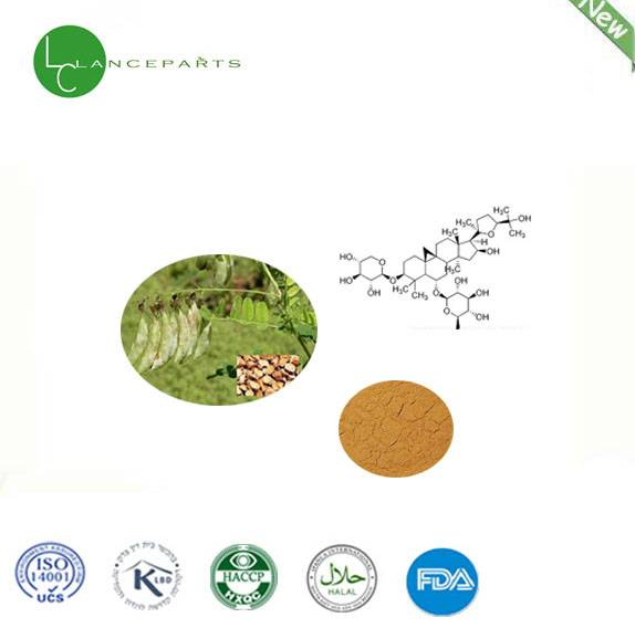 High qulaity product of Astragalus Extract 100% pure natural