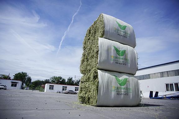 European Alfalfa Hay