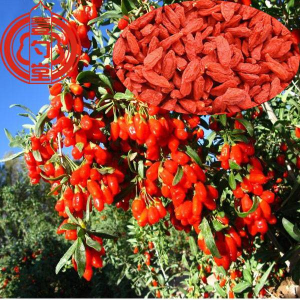 Goji berry dryed bulk goji berries