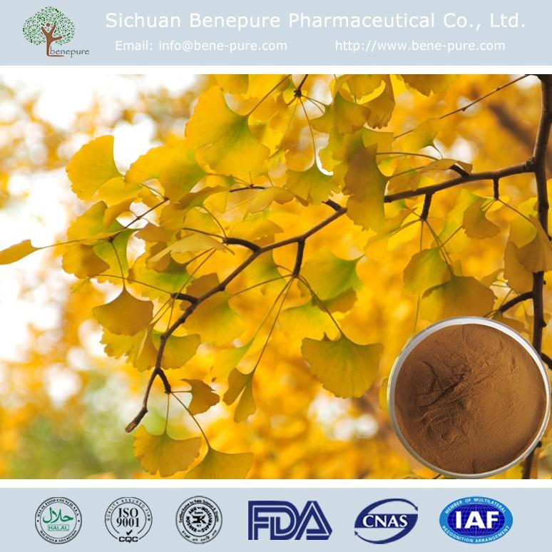 Natural ginkgo biloba extract 24%Flavones/6%Terpene Lactones CAS No.90045-36-6,BENEPURE