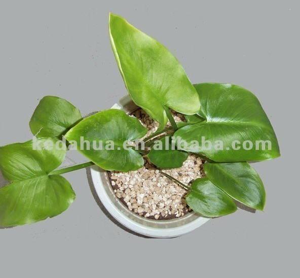 Horticulture vermiculite