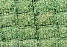 Alfalfa Hay, Rhodes Grass, Oats Hay