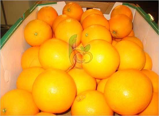 Fresh Egyptian Navel Oranges