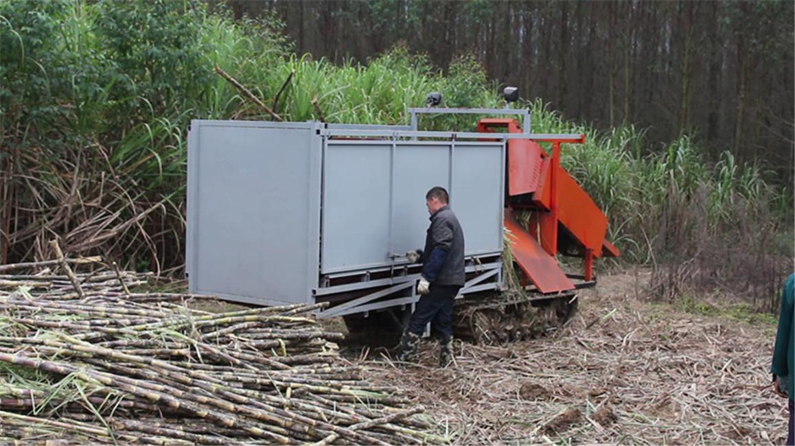 6BCT-5 sugarcane peeler, sugarcane leaf remover