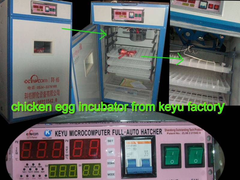 Mini poultry automatic egg incubator