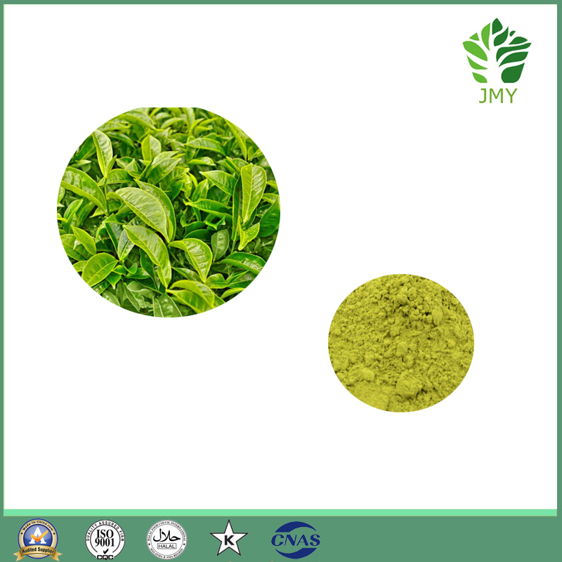 100% Natural Green Tea Extract, EGCG and Tea Polyphenols