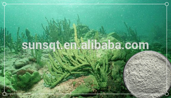 Natural Skin Care needle sponge extract of Freshwater Sponge