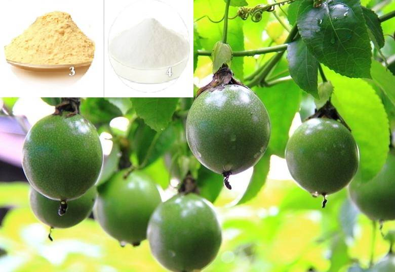 Monk fruit extract/Luo han guo extract