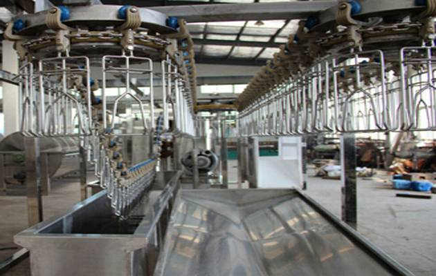 poultry slaughter conveyor