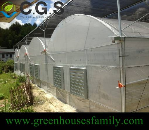 Multi Span Greenhouse with Plastic Cover
