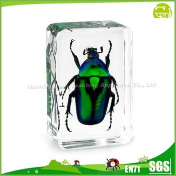 Benji Real Insect Resin Crafts Green Rose Chafer Beetle Insect Block Paperweight Factory
