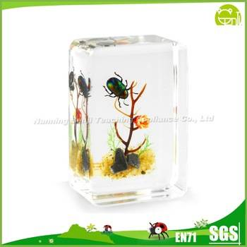 Benji Real Insect Resin Crafts Shining Leaf Beetle Insect Block Paperweight F