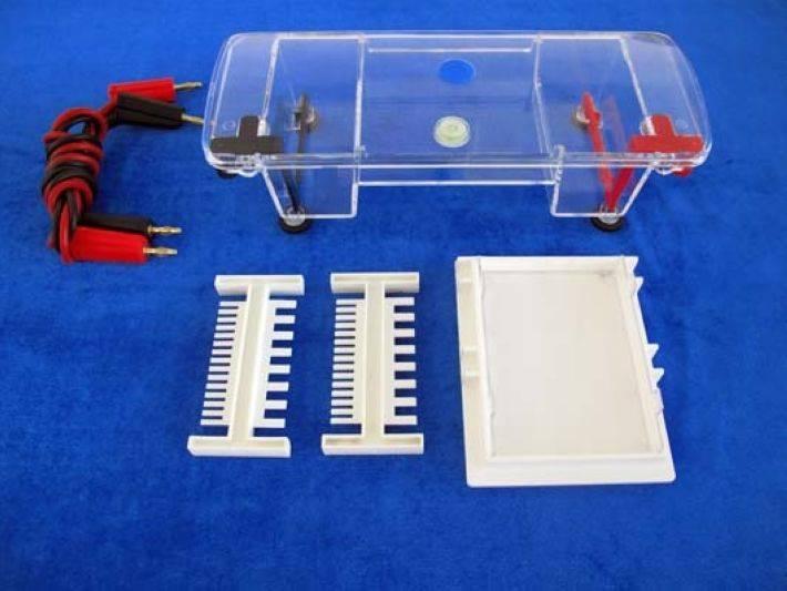 agarose gel electrophoresis lab report